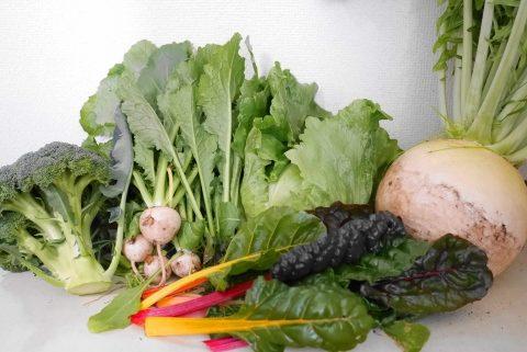 桑高農園で買った野菜たち