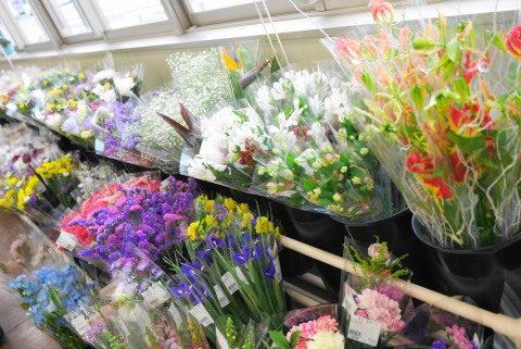 きれいなお花もたくさん