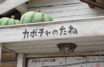 農産物直売所 カボチャのたね