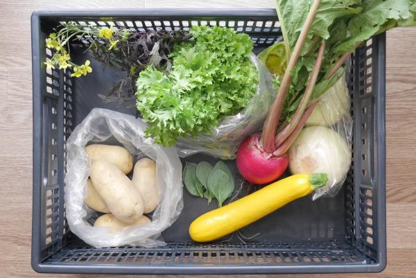 セルバチコなどの野菜